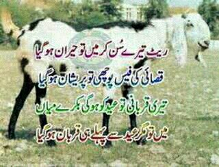 Name:  ItD-Bakra Eid.jpg