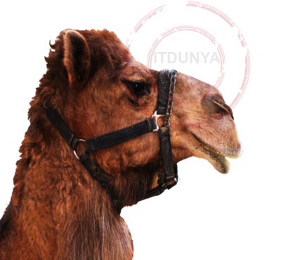 Name:  Camel2.png Views: 139 Size:  175.8 KB