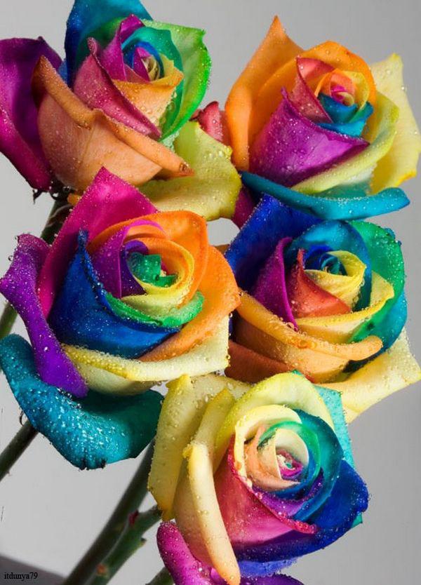 Name:  spectacular-rainbow-flowers03.jpg Views: 1819 Size:  138.5 KB