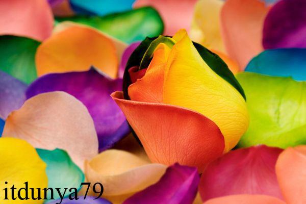Name:  spectacular-rainbow-flowers09.jpg Views: 1839 Size:  59.1 KB